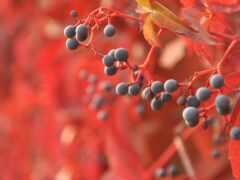 осень, garden, ванна