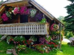 kwiaty, tapety, dziecus