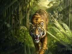 тигр, jungle, кот