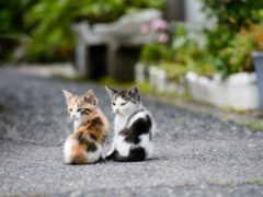 кошки, котята, лайков