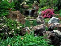 растения, искусственные, камней