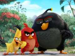 angry, birds, мультфильмы