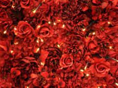 взлёт, цветы, красное