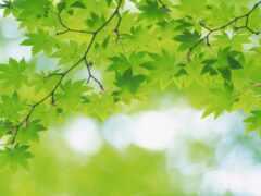 funart, greenery, презентация