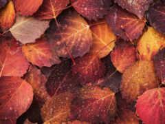 листь, osen, осенний