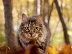 кот, cute, animal