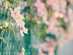 cvety, природа, android