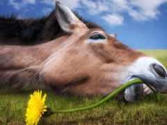 лошадь, лошади, морда