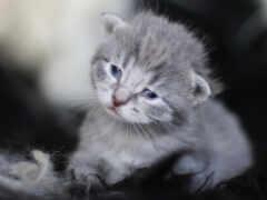 котенок, котята, кот