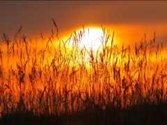 закаты, природа, осень