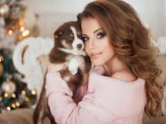 christmas, собака, модель