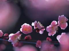 дерево, цветущее