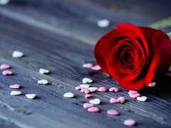 хороший, ночь, роза
