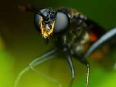 макро, размеры, насекомое