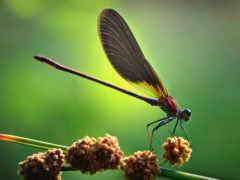 макро, насекомые
