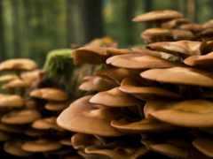 грибы, растут, дерева