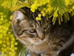 mimosa, тюлень, кот