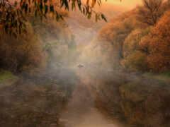 природа, создать, broadleaf