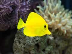 fish, water, underwater