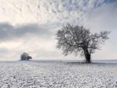 поле, заснеженное, пейзажи -