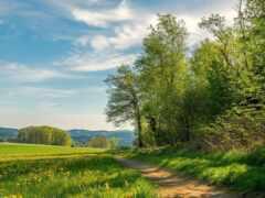 landscape, весна, природа