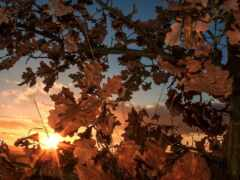 лист, осень, закат