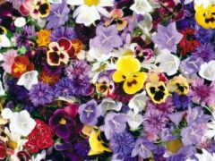 цветы, красивый, яркий