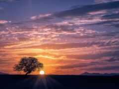 дерево, рассвет, природа