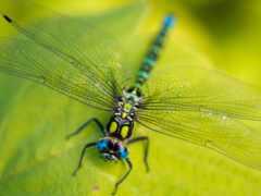 насекомое, стрекоза, фото