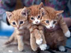 kotenk, котенок, define
