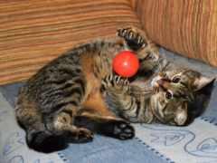 кот, nike, играет