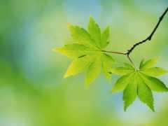 листва, дерево, анимация