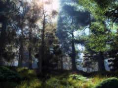 природа, лес, солнце