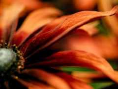cvety, flowers, цветы