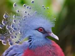 птица, миро, amazing