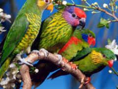 oiseau, попугай, птица