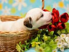 собака, цветы, world