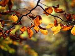 осень, instagram, листва