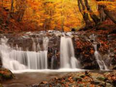 осень, листва, листопад