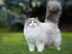кошки, кот, будет