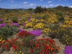 desierto, florido, chile