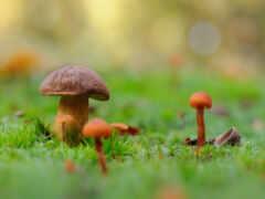 гриб, трава, белый