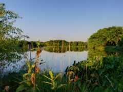 пейзажи -, gül, озеро