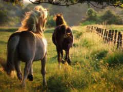 caballos, run, caballo