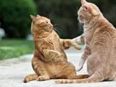 кота, два, youtube