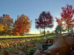 otoño, rboles, imágenes