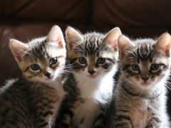котята, смотрят