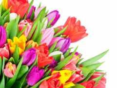 photos, flowers, stock