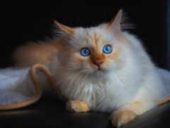 кот, animal, see
