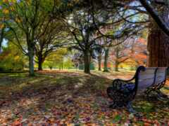 осень, скамейка, park